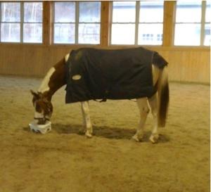 horse testing